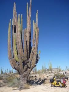 Mexiko, Baja California. Eine wunderschöne Halbinsel mit abgefahrenen Kakteen. Nach etwa 22.000 km.