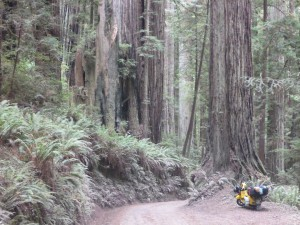 USA Kalifornien, Redwoods National Park. Nach etwa 16.000km.