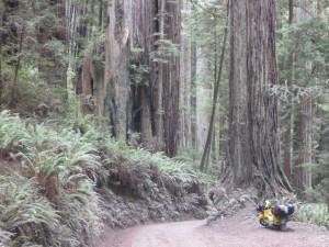 USA Kalifornien, Redwoods National Park. Nach etwa 16.000km.